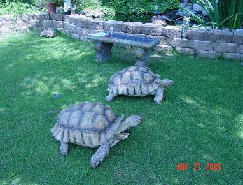 Sulcata Tortoise Care Information